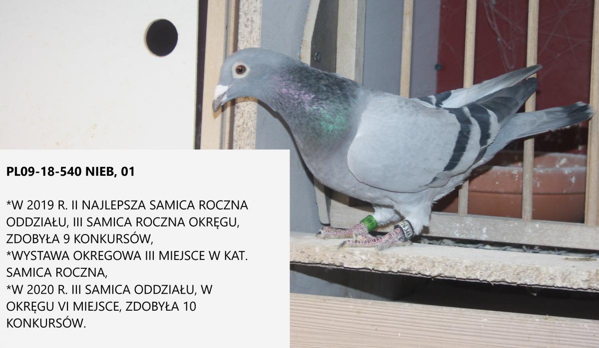 Solecki Mariusz - sekcja Radzyń Podlaski