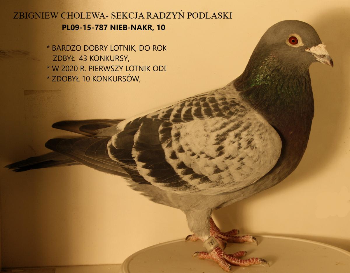 Cholewa Zbigniew -Sekcja Radzyń Podlaski